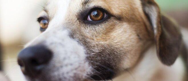 Dūre vai plauksta – kā ļaut sunim iepazīt cilvēku