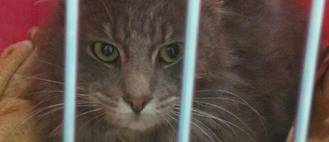 Glābšanas operācija 'Barsiks': sveši ļaudis apvienojas, lai palīdzētu kaķītim Imantā