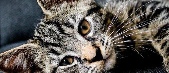 Jautājumi par kaķa veselību, uz kuriem atbildes jāzina katram saimniekam
