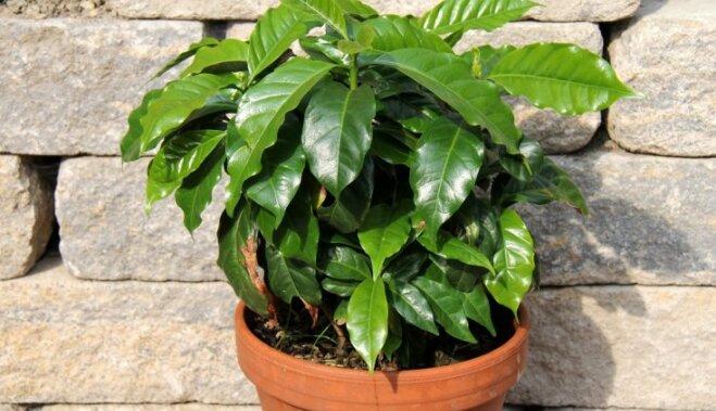 Тропические деревья в домашних условиях