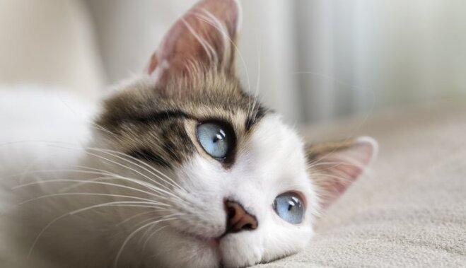 Jautājumi par kaķa kopšanu, kuri ir aktuāli katram saimniekam