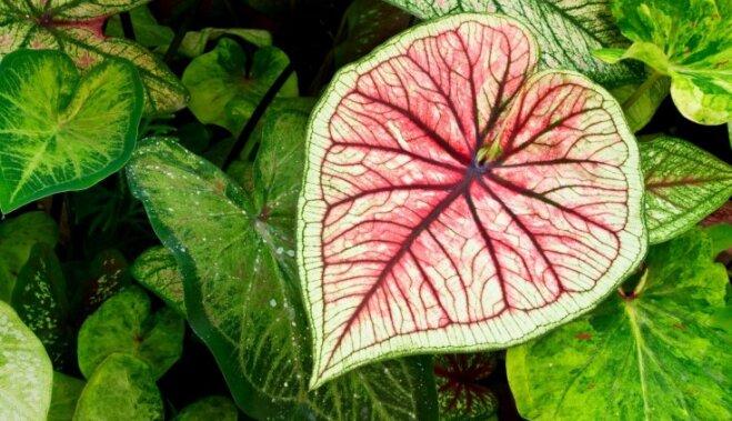 Комнатные растения, которые приносят в дом любовь и семейное счастье