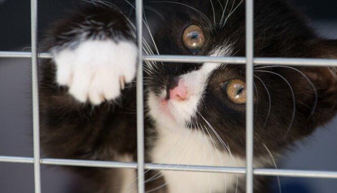 Ar Bridžitas Bardo fonda atbalstu sterilizēs 500 ielas kaķus Rīgā