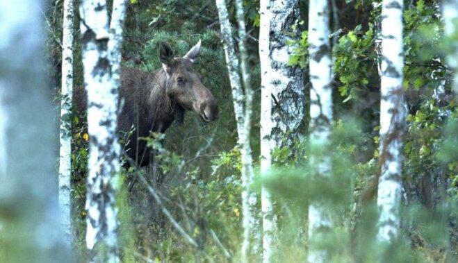 ФОТО: Природа в Чернобыле — как живут звери на месте трагедии 31 год спустя