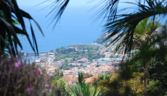 Ziedošā Madeira