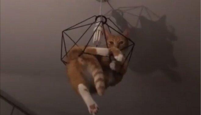 Trakulīgais kaķis Normans, kas trijos naktī izdomāja karāties pie lampas