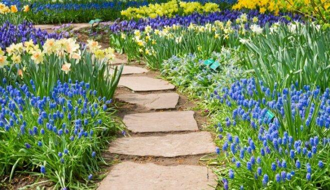 Устраиваем садовые дорожки: просто и функционально