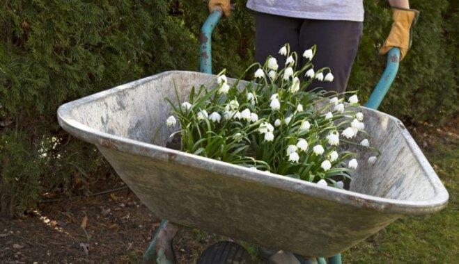 Dārza darbi nesnauž – kas jāpagūst no 9. līdz 16. aprīlim?