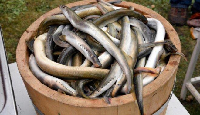 Uz Centrāltirgu – pēc lielā loma! 14. aprīlī norisināsies otrie Rīgas Zivju svētki