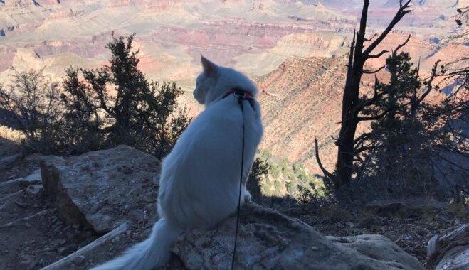 Ceļotājs Cēzars – kaķis, kas apceļojis 14 valstis un neplāno apstāties