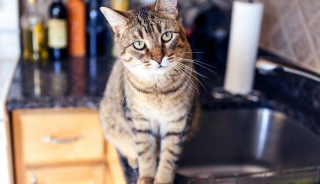 Foto: Neatņemamais palīgs virtuvē – kaķis