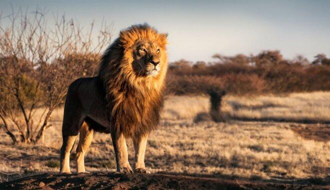 Bieds savvaļā: astoņi dzīvnieki, kas cilvēku var nāvējoši ievainot