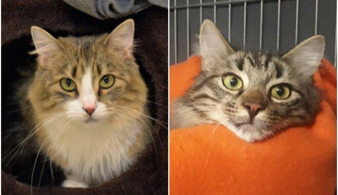 Runci Trusīti draudēja noindēt; mājas meklē divi mīļi kaķi
