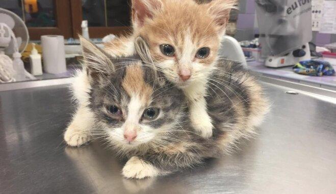 Dzīvnieku biedrība lūdz palīdzību atrasto un izglābto kaķu uzturēšanai