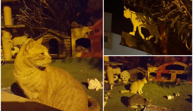 Foto: Kaķu ciematiņš Maltā, ko vēlējās iznīcināt