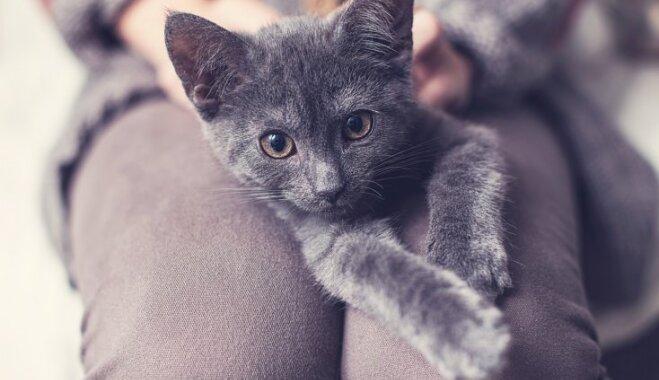 Mājdzīvnieks uz laiku – kas ir 'pagaidu mājas' un kā var palīdzēt kaķiem