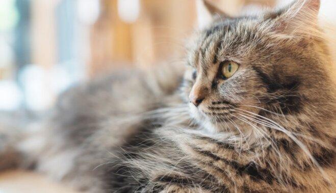 Ko darīt, ja suns vai kaķis svētku laikā aizbēg no mājām