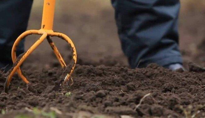 Tava paradīze: 10 zelta likumi atpūtas dārza iekopšanai