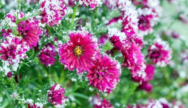 Зима близко: Как уберечь садовые растения от морозов