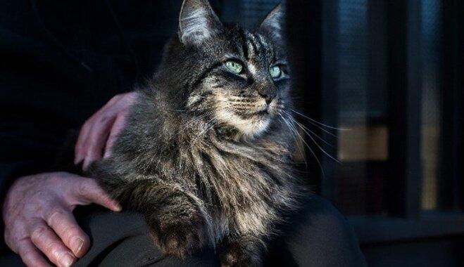 Забота о пожилой кошке — что надо учитывать?