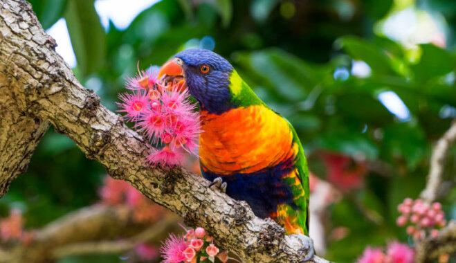 Цветик-семицветик мирового масштаба: Топ-9 самых красивых ботанических садов в мире