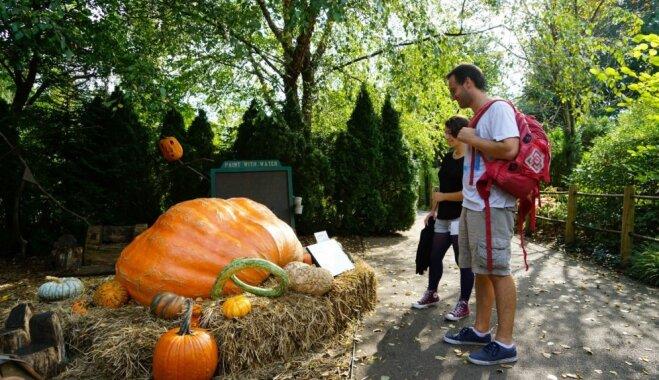 Foto: Ņujorkas Botāniskais dārzs pārtop par spokaino ķirbīšu pasauli