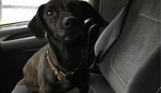 Straupē atrastajai suņu meitenei noskaidrots saimnieks