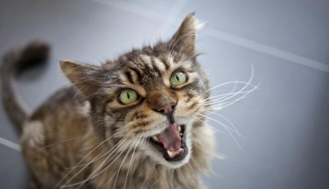 Noderīgi padomi, kā atradināt kaķi no šķietami nevainīgas košanas cilvēkam