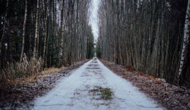 ФОТО. Зимняя прогулка по болотной тропе Ниедрайс-Пилка на смотровую вышку