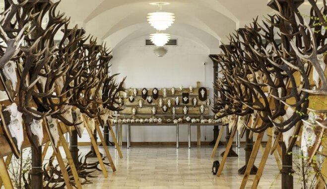 Jaunmoku pilī apskatāma izcilāko medību trofeju izstāde