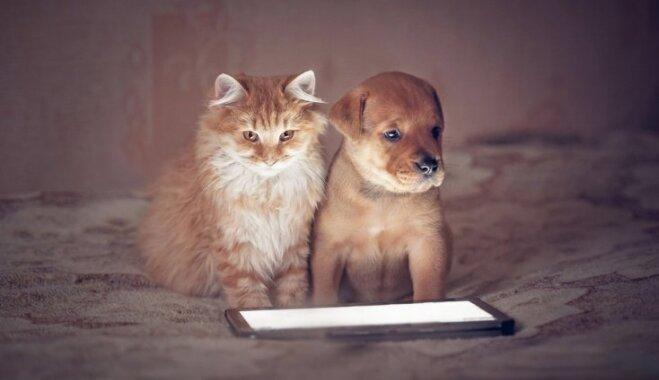 Mājdzīvnieki digitālajā laikmetā: ko varam darīt, lai mūsu mīluļi būtu drošībā