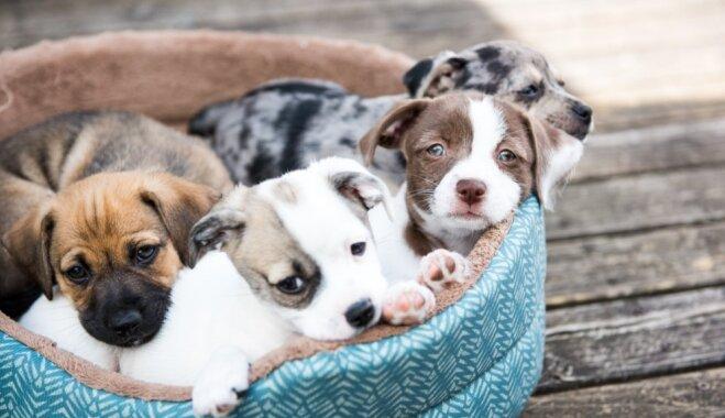 """""""Слишком дорого, слишком стар, изменится характер"""": мифы и правда о стерилизации домашних животных"""