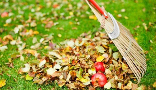 Dārza darbi neiztrūkst arī rudenī. Kas jāpaveic oktobrī?