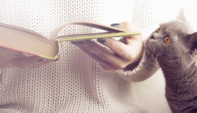 10 pazīmes, kas apstiprina – tu esi labs kaķa saimnieks