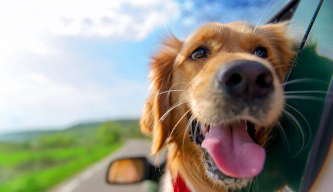 10 вещей, которые раздражают вашу собаку
