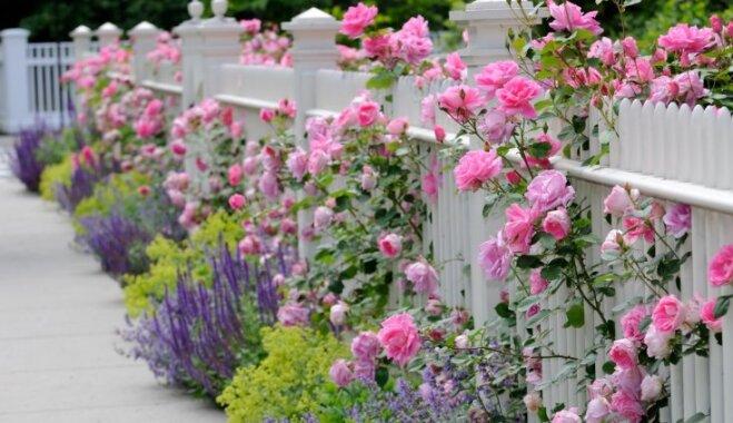 Влияет ли забор на урожай в саду и огороде?