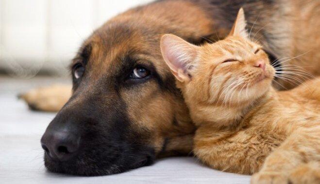 Kas jāzina par dzīvnieku pārdošanu, atdošanu un dāvināšanu