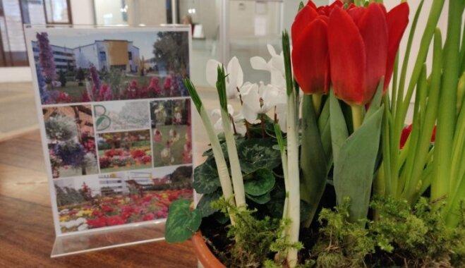 Foto: Bulduru Dārzkopības vidusskolas stikla 'pilīs' jau uzplaucis pavasaris