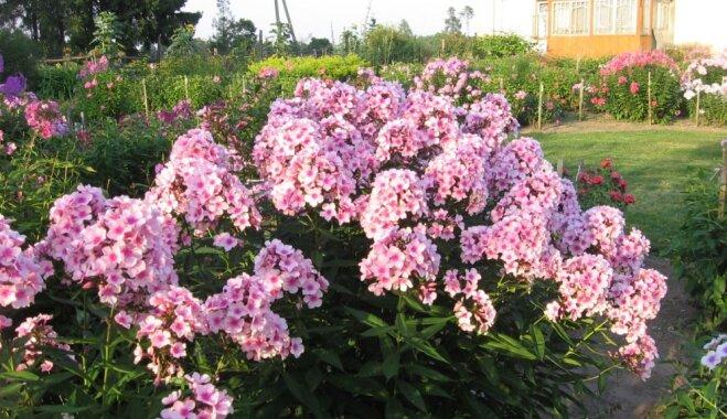 Ar atvasaras noskaņu: iedvesmojoši un skaisti iekopti dārzi