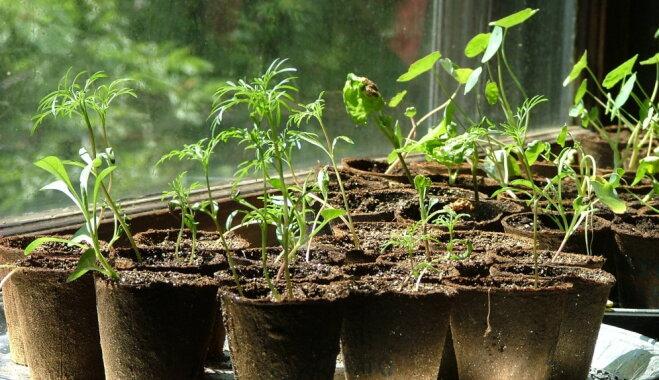 Agrie dārza darbi: sēšanas un dēstu audzēšanas ābece
