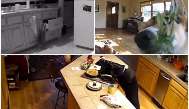 Zvēru slepenā dzīve: novērošanas kamerās fiksēti mīluļi, kas darījuši blēņas