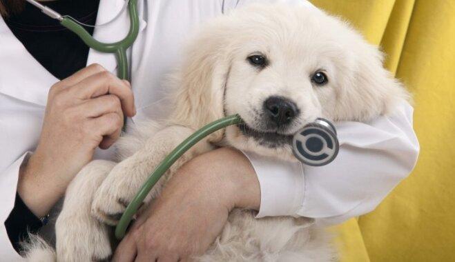 Бульдоги и лабрадоры против рака. Как собаки помогают бороться с болезнью