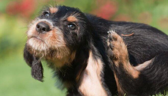 Odu kodumi dzīvniekiem: cik bīstami un kā no tiem izvairīties