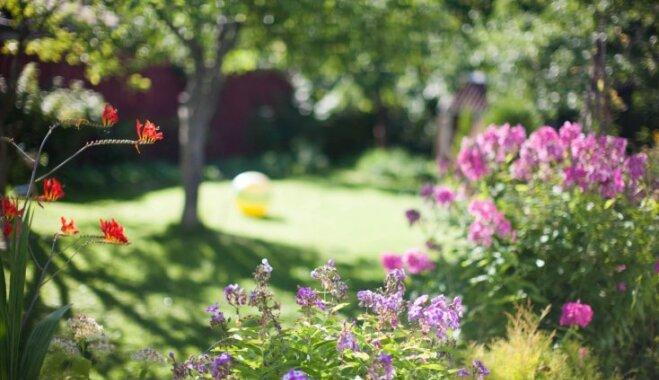 Kas darāms dārzā no 17. līdz 24. jūlijam?
