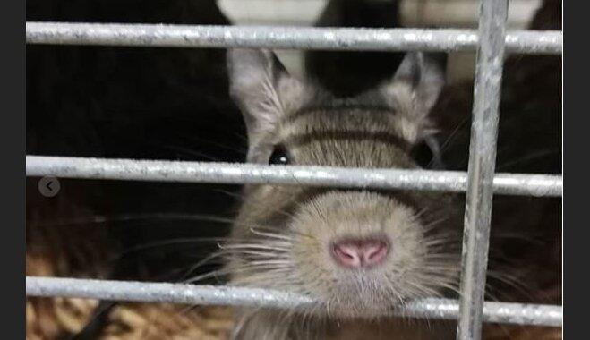 Visi dzīvnieki alkst pēc mīlestības – mājas meklē 13 degu