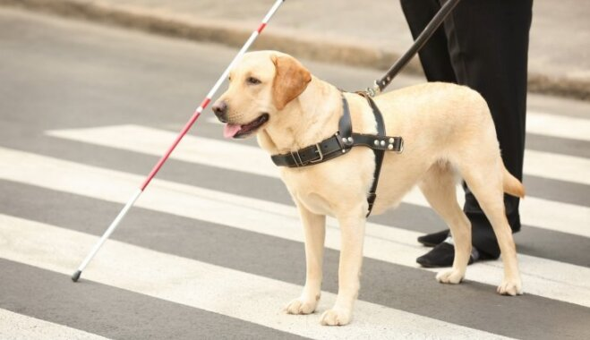 Servisa suņi Dziesmu un Deju svētkos ielaisti netiks