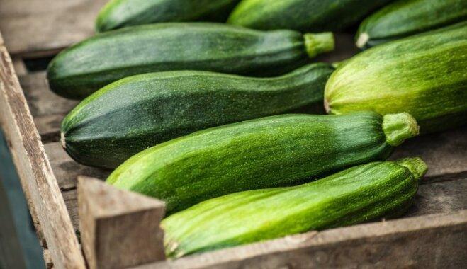 Время собирать кабачки: когда и как правильно снимать урожай
