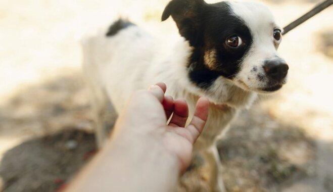 30 вещей, которые бы вам сказала ваша собака, если бы умела говорить