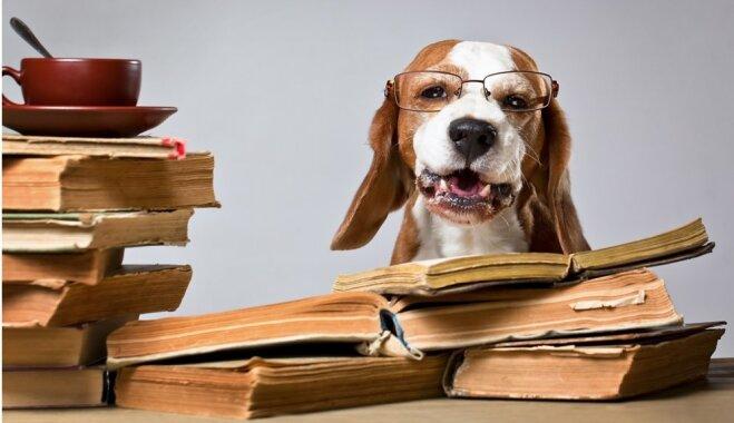 Ученые разобрались, кто умнее — кошки или собаки