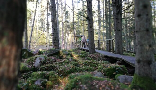 Mistiskie akmeņu krāvumi Kurzemē: pastaiga pa Kaltenes kalvu dabas taku